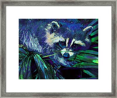 Midnight Racoon Framed Print by Jane Schnetlage
