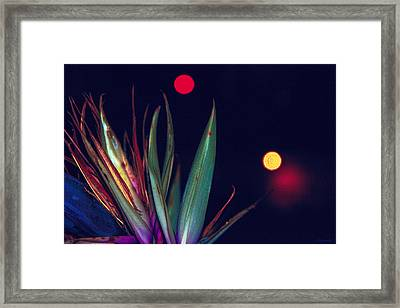 Midnight Reach Framed Print by Renee Anderson