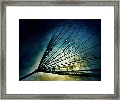 Midnight Tears Framed Print by Marianna Mills