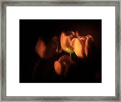 Midnight Tulips Framed Print by Julie Palencia