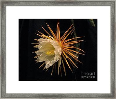 Midnight Vision Framed Print