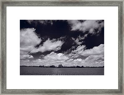 Midwest Corn Field Bw Framed Print by Steve Gadomski