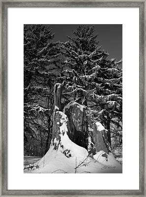 Framed Print featuring the photograph Midwest Sequoia by Ed Cilley