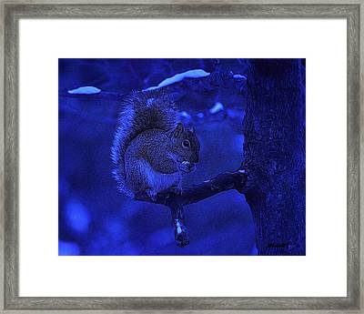 Midwinter Snack Framed Print