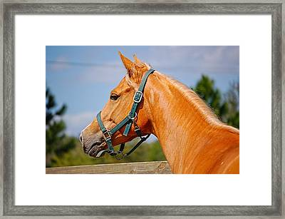 Framed Print featuring the photograph Miffilena Lady by Pamela Blizzard
