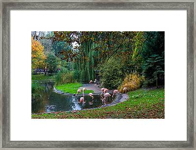 Mighty Legs Framed Print