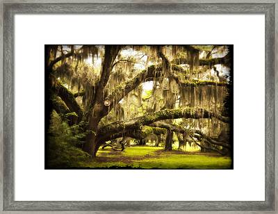 Mighty Live Oak Framed Print by Barbara Northrup