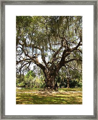 Framed Print featuring the photograph Mighty Oak by Beth Vincent