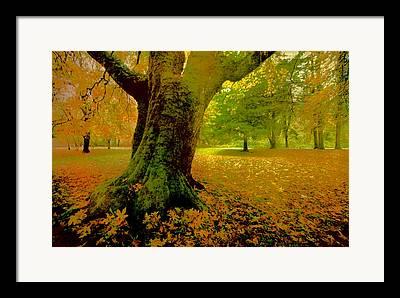 Red Fallen Leave Framed Prints