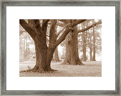 Framed Print featuring the photograph Mighty Oaks by Jim Whalen