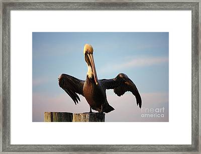 Mighty Pelican Framed Print