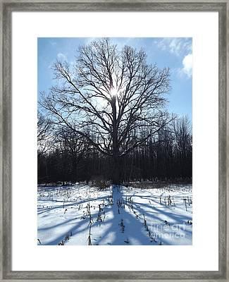 Mighty Winter Oak Tree Framed Print by Erick Schmidt