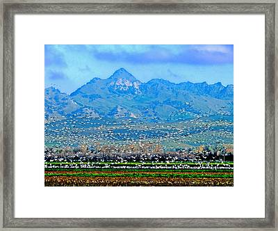 Migrating Birds Over Sutter Wilflife Refuge Framed Print