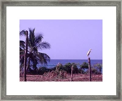 Migrating Egret Framed Print by Marianne Miles