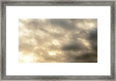 Migrating Geese Framed Print by Babak Tafreshi