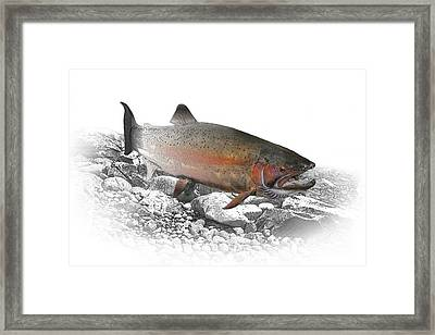 Migrating Steelhead Rainbow Trout Framed Print