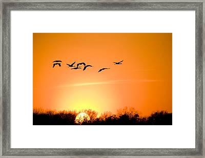 Migration Framed Print by Alexey Stiop