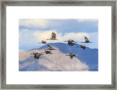 Framed Print featuring the photograph Migration by Beverly Parks