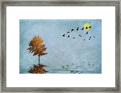 Migration Framed Print by John Edwards
