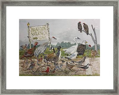 Migration Marathon Framed Print