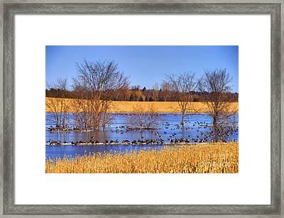Migration.. Framed Print