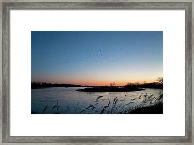 Migratory Birds Framed Print by Jim West