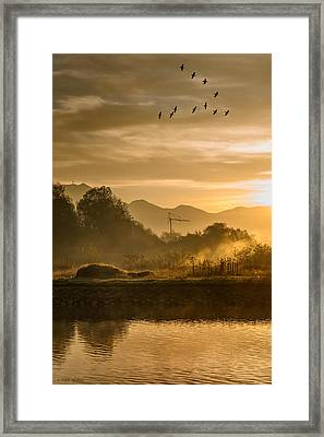 Migratory Birds Framed Print