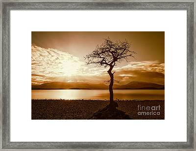 Milarochy Bay Tree Loch Lomond Framed Print by John Farnan
