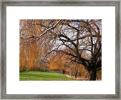 Framed Print featuring the photograph Mild Winter In Mayesbrook Park - Dagenham by Mudiama Kammoh