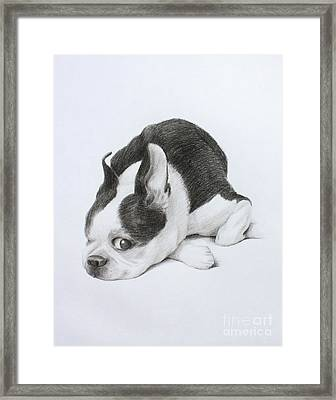 Miles Framed Print by Denise M Cassano