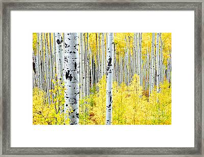 Miles Of Gold Framed Print by The Forests Edge Photography - Diane Sandoval