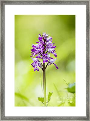 Military Orchid Framed Print by Tim Gainey