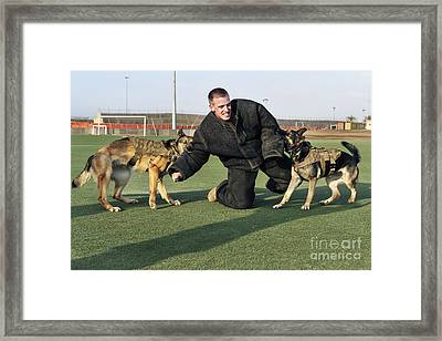 Military Working Dogs Subdue A Handler Framed Print by Stocktrek Images