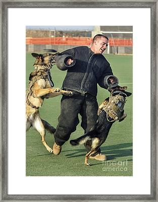 Military Working Dogs Take Framed Print by Stocktrek Images