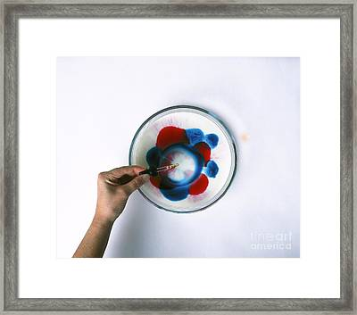 Milk And Dye, Showing Surface Tension Framed Print