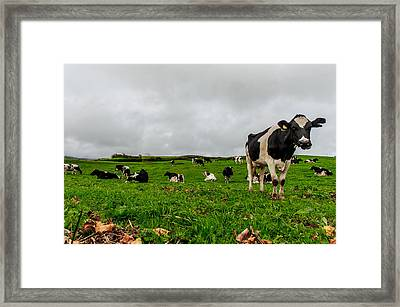 Milk Nature Nose Framed Print
