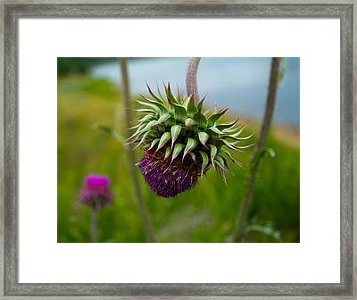 Milk Thistle Framed Print