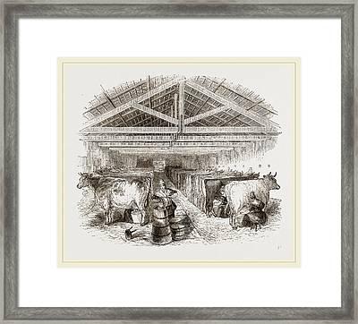 Milking-shed Framed Print