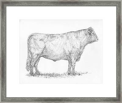 Milking Shorthorn Bull Framed Print by J E Vincent