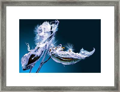 Milkweed Chill Framed Print by Brian Stevens