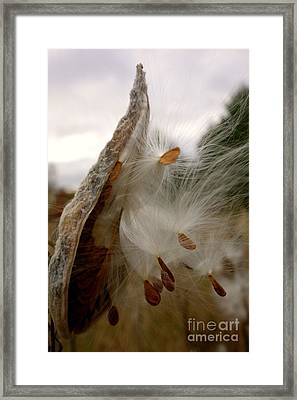 Framed Print featuring the photograph Milkweed by Jacqueline Athmann