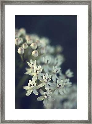 Milkweed  Framed Print by Saija  Lehtonen