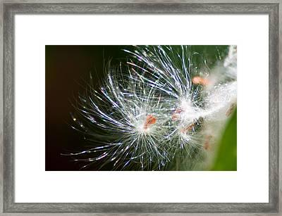 Milkweed Seed Framed Print