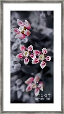 Milkweed Snowflakes Framed Print by Henry Kowalski