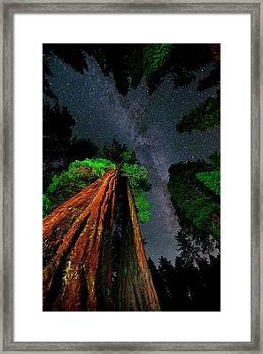 Milky Way Over Giant Sequoias Framed Print