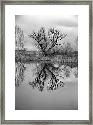 Mill Pond Tree Framed Print