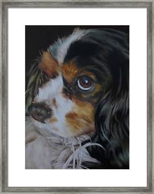 Milo Framed Print by Cherise Foster