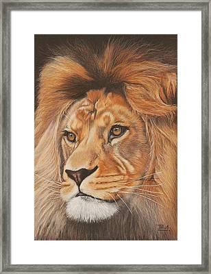 Milo - The Barbary Lion Framed Print