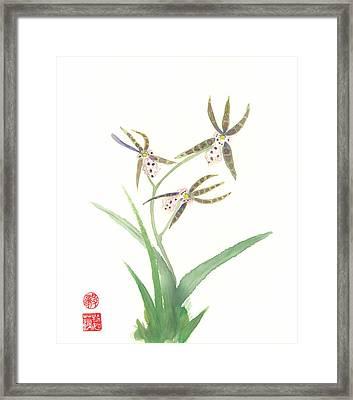 Miltonia Orchid Framed Print