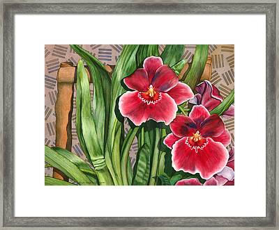 Miltonia Orchids Framed Print
